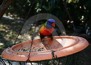 Parrot Feeding Stock Photos - Image: 665363
