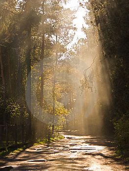 Sunny Beam Royalty Free Stock Photography - Image: 6601737