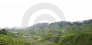 Tea Plantation Royalty Free Stock Photography - Image: 6616197