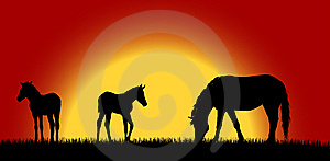 Mare With Foals 2 Stock Images - Image: 6617734