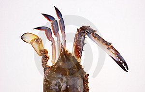 Half Crab Royalty Free Stock Photos - Image: 6618058