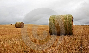 Wheat Pack Stock Images - Image: 6626464