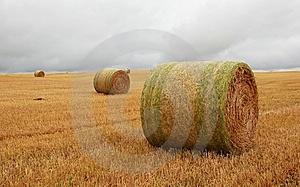 Wheat Pack Stock Image - Image: 6626491