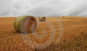 Wheat Pack Stock Images - Image: 6626514