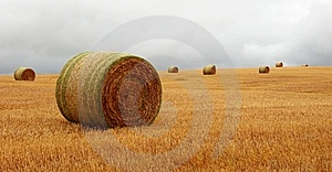 Wheat Pack Royalty Free Stock Images - Image: 6626529