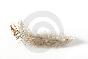 Feather Royalty Free Stock Image - Image: 6629266