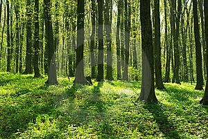 Forest Royalty Free Stock Images - Image: 6629359