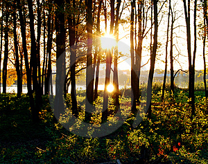 Sundown in a forest Free Stock Image