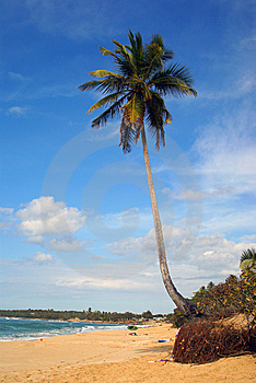 Tropical Paradise Beach With Single Palm Tree Stock Image - Image: 6640241