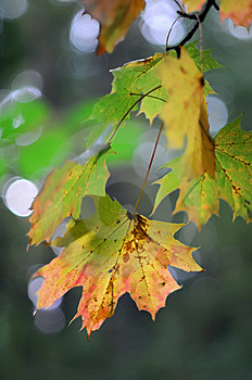 Autumn Leafs Royalty Free Stock Images - Image: 6643229