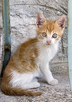 Little Kitten Royalty Free Stock Image - Image: 6650496