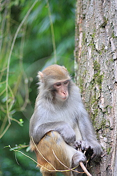 Monkey Royalty Free Stock Images - Image: 6651639