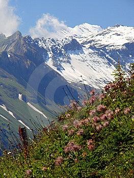 Beautiful Swiss Scenery Royalty Free Stock Photo - Image: 6663365