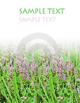 Purple Flower And Grassplot Royalty Free Stock Photo - Image: 6664115