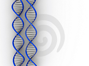 DNA Structure Royalty Free Stock Images - Image: 6668389