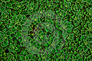 Grid Flower Royalty Free Stock Images - Image: 6677099