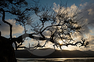 Tree Struggling To Survive At Beach In Silhouette Royalty Free Stock Photos - Image: 6678368