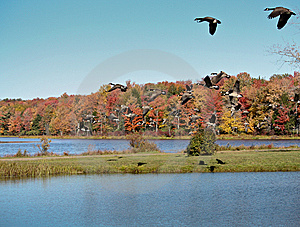 Flying Geese Stock Images - Image: 6682044