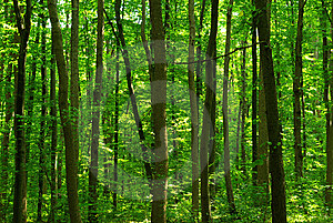 Forest Stock Images - Image: 6685844
