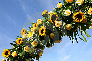 Sunflowers Against The Sky Royalty Free Stock Image - Image: 6685966