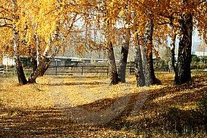 Mellow Autumn Stock Images - Image: 6689034