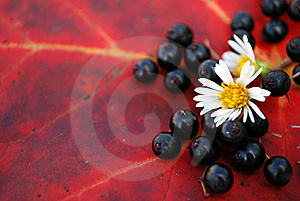 Autumn Details Stock Photo - Image: 6689580