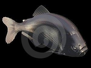 Gold Fish Royalty Free Stock Photos - Image: 6692238
