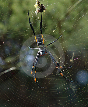 Spider Royalty Free Stock Image - Image: 672806