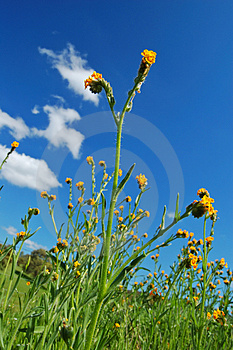 Mighty Flower In Springtime Stock Photos - Image: 676473