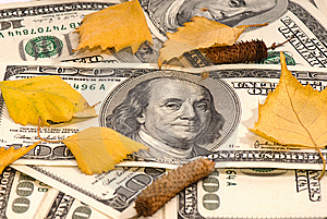 Dollars Of The USA And Birch Leaves Royalty Free Stock Photos - Image: 6701168