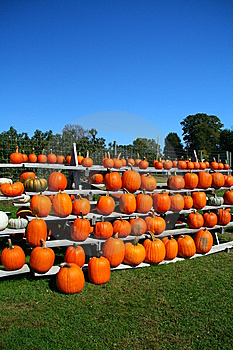 Rows Of Pumpkins Stock Photography - Image: 6702632