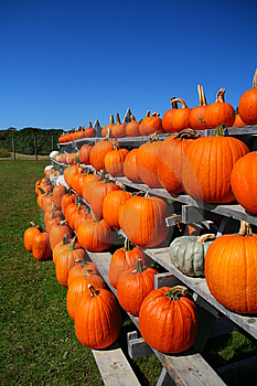 Rows Of Pumpkins Royalty Free Stock Image - Image: 6702646