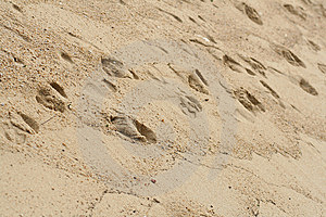 Foot Prints In Sand Stock Photo - Image: 6705180