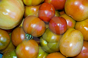 Red And Green Tomatoes Background Royalty Free Stock Photo - Image: 6709205