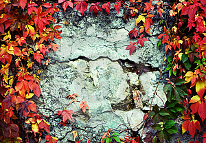 Vine Branch On The Wall. Stock Photos - Image: 6711203