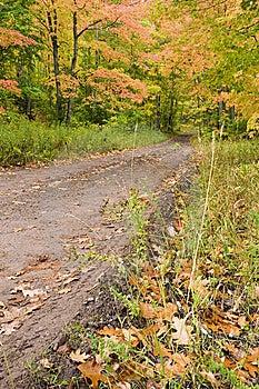 Muddy Road Through Fall Foliage. Stock Photo - Image: 6715610