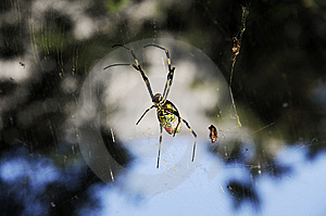 Spider Royalty Free Stock Photo - Image: 6716355