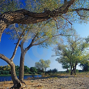 Poplars On River Side Royalty Free Stock Photography - Image: 6721867