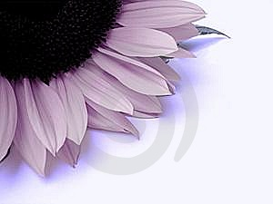 Part Of A Flower Stock Photos - Image: 6723033