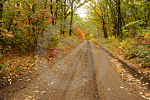 Autumn road Free Stock Photos