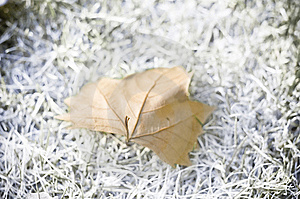 Dry Leaf Stock Image - Image: 6729411
