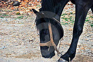 Black Horse Stock Photography - Image: 6731742