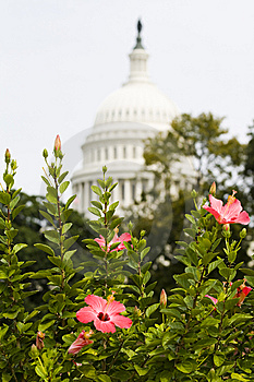 The Capitol Stock Photo - Image: 6733700