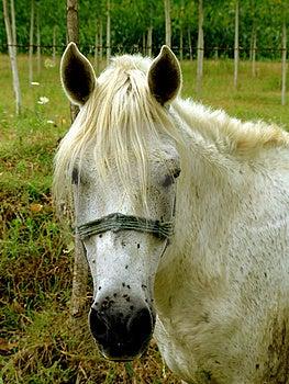 Horse Royalty Free Stock Image - Image: 6736016