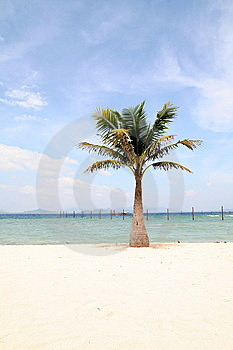 Coconut Palm Stock Photo - Image: 6740770