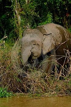 Elefante Enano 2 Imagenes de archivo - Imagen: 6741264