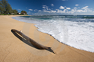 Tropical Shoreline Royalty Free Stock Image - Image: 6749426