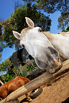 Close-up Of Horse Nose Stock Image - Image: 6754431