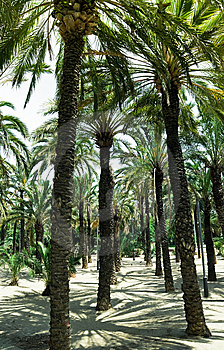 Palm Trees Royalty Free Stock Images - Image: 6754709