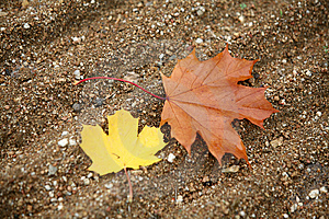 One Brown Leave Royalty Free Stock Photo - Image: 6754845